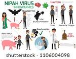 nipah virus infographics... | Shutterstock .eps vector #1106004098