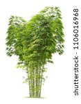 Bamboo. Isolated Tree On White...