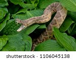 Close Up Of Rattlesnake In...