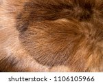 the fur background and texture.    Shutterstock . vector #1106105966