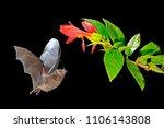 wildlife action scene from...   Shutterstock . vector #1106143808