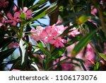 Beautiful And Tender Blooming...