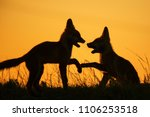 silhouette of two playing foxes ... | Shutterstock . vector #1106253518