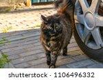 Furry Cat Near The Wheel Of Th...