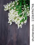 acacia branch flowers on a dark ... | Shutterstock . vector #1106496746