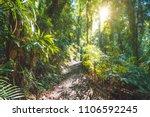 Rainforest of Dorrigo National Park, New South Wales, Australia - stock photo