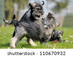 Stock photo puppies playing 110670932