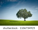 alone tree on green meadow over ...   Shutterstock . vector #1106734925