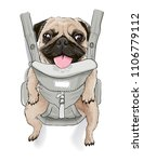 Stock vector funny pug dog on front carrier illustration for fun t shirt 1106779112