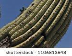 desert cacti sonora | Shutterstock . vector #1106813648