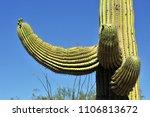 desert cacti sonora | Shutterstock . vector #1106813672