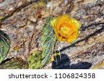 desert sonora. cactus flower | Shutterstock . vector #1106824358