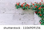 roses on an old wall old brick... | Shutterstock . vector #1106909156