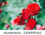 detail of red roses in the... | Shutterstock . vector #1106909162