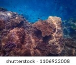 coral and small fish from the... | Shutterstock . vector #1106922008