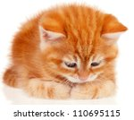 Stock photo cute little red kitten isolated on white background 110695115