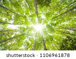 forest with sun ray down top... | Shutterstock . vector #1106961878