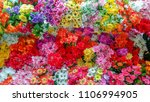 colorful flowers refreshed... | Shutterstock . vector #1106994905