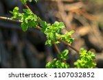 gardening in the summer house... | Shutterstock . vector #1107032852