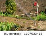 gardening in the summer house... | Shutterstock . vector #1107033416