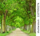 tunnel like avenue of linden... | Shutterstock . vector #1107050276