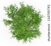 ash tree top in 100mpix | Shutterstock . vector #110705792