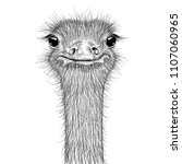 ostrich sketch. head closeup.... | Shutterstock .eps vector #1107060965