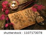 primrose flowers with herbal... | Shutterstock . vector #1107173078