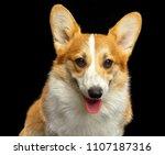 welsh corgi pembroke dog ... | Shutterstock . vector #1107187316