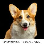welsh corgi pembroke dog ... | Shutterstock . vector #1107187322