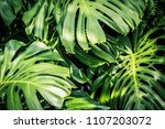 beautiful green tropical leaves ... | Shutterstock . vector #1107203072