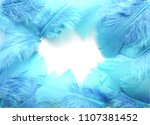 Blue Feathers On White...
