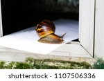 Small photo of a snail mail