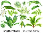 set of tropical plants  palm... | Shutterstock . vector #1107516842