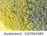 colony characteristics of... | Shutterstock . vector #1107565385