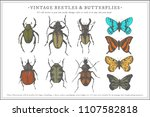 vector hand drawn beetle  ... | Shutterstock .eps vector #1107582818