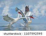 palican with open wings ... | Shutterstock . vector #1107592595