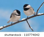 Two Adorable Black  Capped...