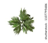 coconut palm tree overhead view ... | Shutterstock . vector #1107795686