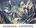 vintage garden leaf digital... | Shutterstock . vector #1107810356