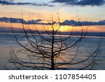 sunset over the solitaire tree... | Shutterstock . vector #1107854405