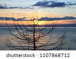 sunset over the solitaire tree... | Shutterstock . vector #1107868712