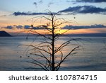 sunset over the solitaire tree... | Shutterstock . vector #1107874715