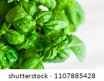 fresh basil with drops of water | Shutterstock . vector #1107885428