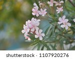 flowers are blooming in the... | Shutterstock . vector #1107920276