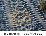Lion Paw Prints In The Sand...