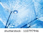 Abstract Dandelion Flower Seed...