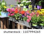 Flowers Are For Sale At A Smal...