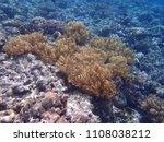 underwater coral reef... | Shutterstock . vector #1108038212