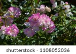stunningly magnificent romantic ...   Shutterstock . vector #1108052036